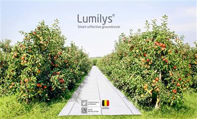 Lumilys installed to improve PAR distribution into an apple orchard. 